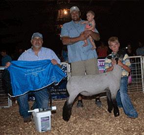 Hindman Show Lambs :: Champions